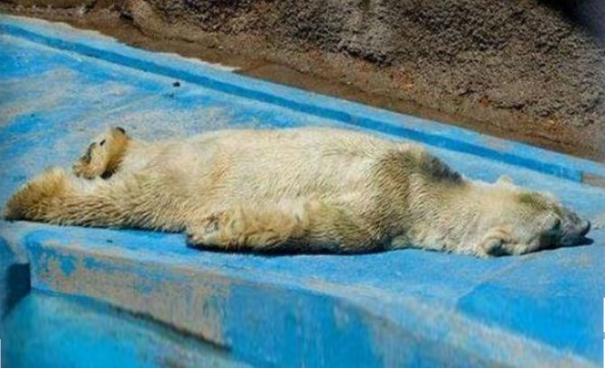sad-polar-bear-2